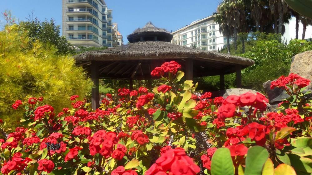 Gardens, Funchal